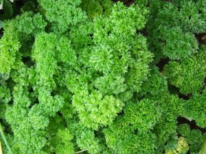 organic curly parsley