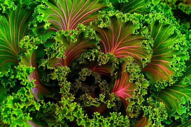 Kale, an awesome SUPER-food for your liver