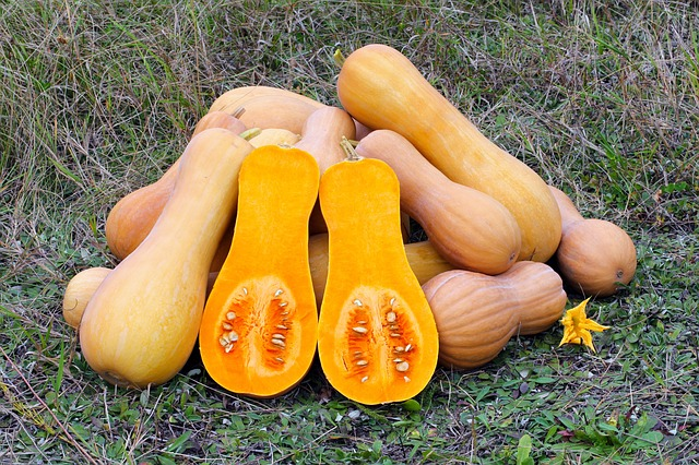 Butternut Squash Highly Nutritious and Alkalizing