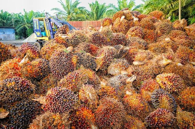 Palm Oil, The Dangerous Silent Killer