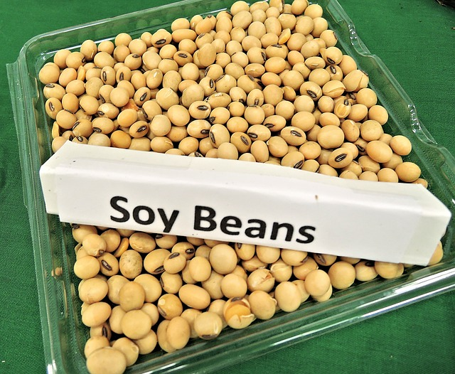 SOYA HEALTH RISKS! Not the healthy wonder-food you think it is!